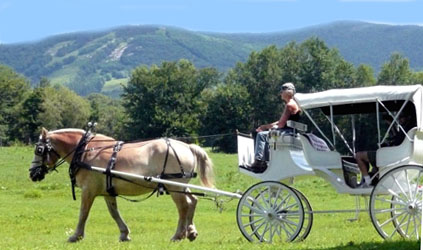 Spring Carriage Rides  at the Farm by the River B and B