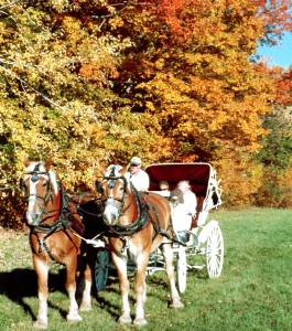 Take a Fall Carriage ride along the Saco River, North Conway NH