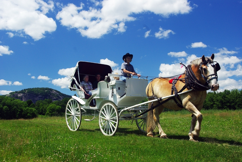 Horse-drawn carriage ride at the Stables at the Farm by the River Photo taken by Alexander Morse