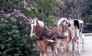 Carriage Ride at the Farm by the River B and B North Conway