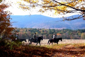 Horseback Riding with views of the Moat Mountains-Farm by the River