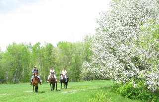 Spring Fling Package with horseback riding- A Family Friendly Activity