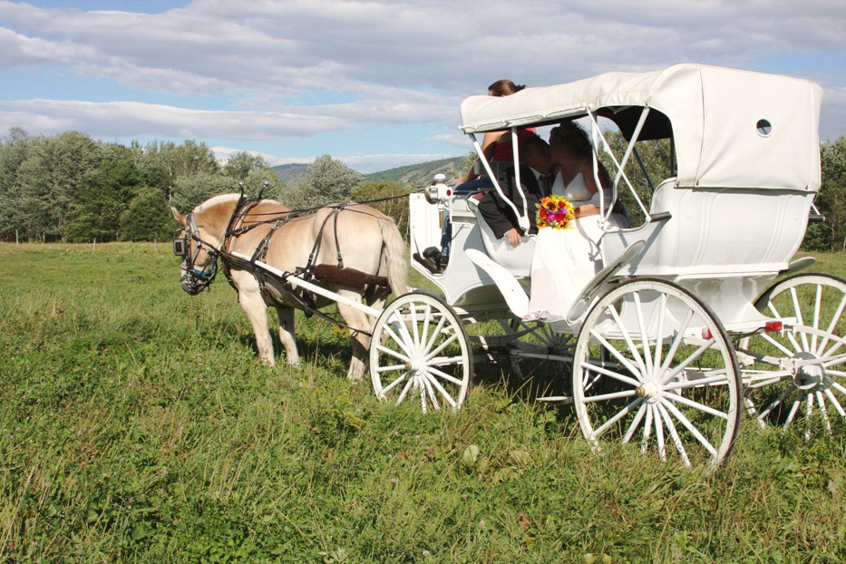 Matheson's Wedding  with Carriage Ride wedding at the Farm by the River Bed andBreakfast