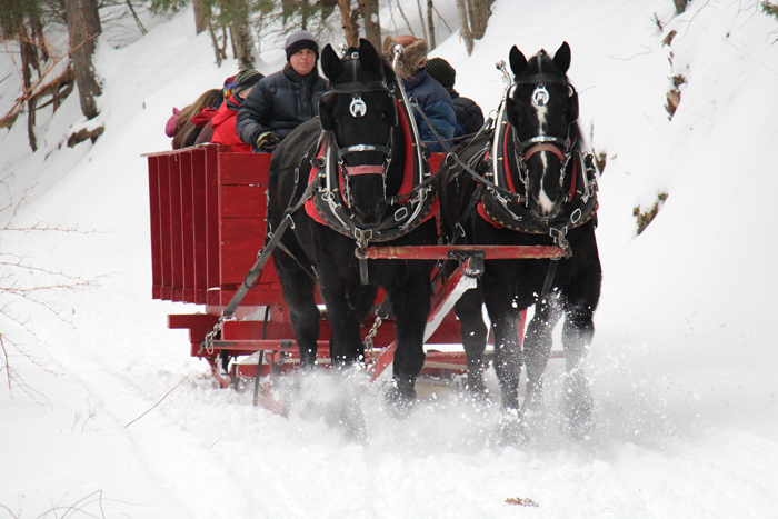 Winter Family Fun- Sleigh rides at the Farm by the River Bed and Breakfst with Stables
